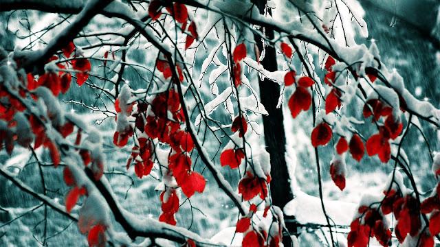 Hình nền mùa đông đẹp nhất - ảnh 12