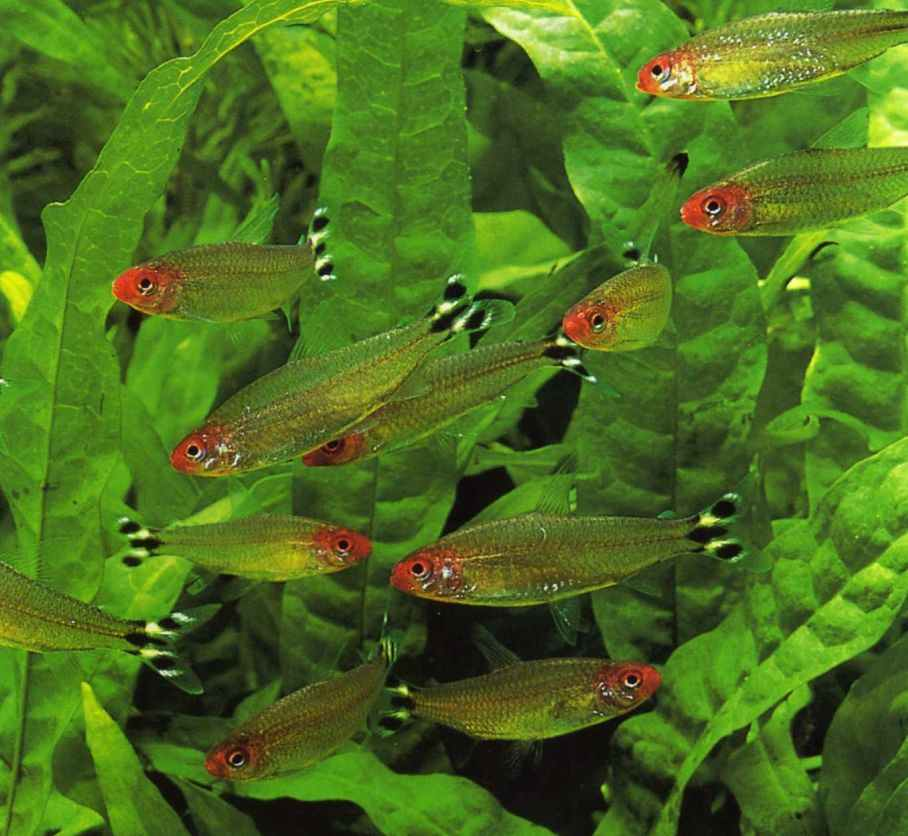 Eels Aquarium Eels Fish Guides for Freshwater Eels and