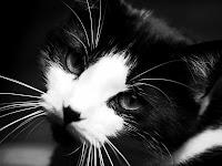 imagenes gatitos