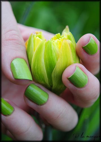 http://1.bp.blogspot.com/-4ZDHUQxkg18/TmnIoTxk1QI/AAAAAAAACBE/YjFrC-d-zMo/s1600/light+green+nail+designs+%25281%2529.jpg