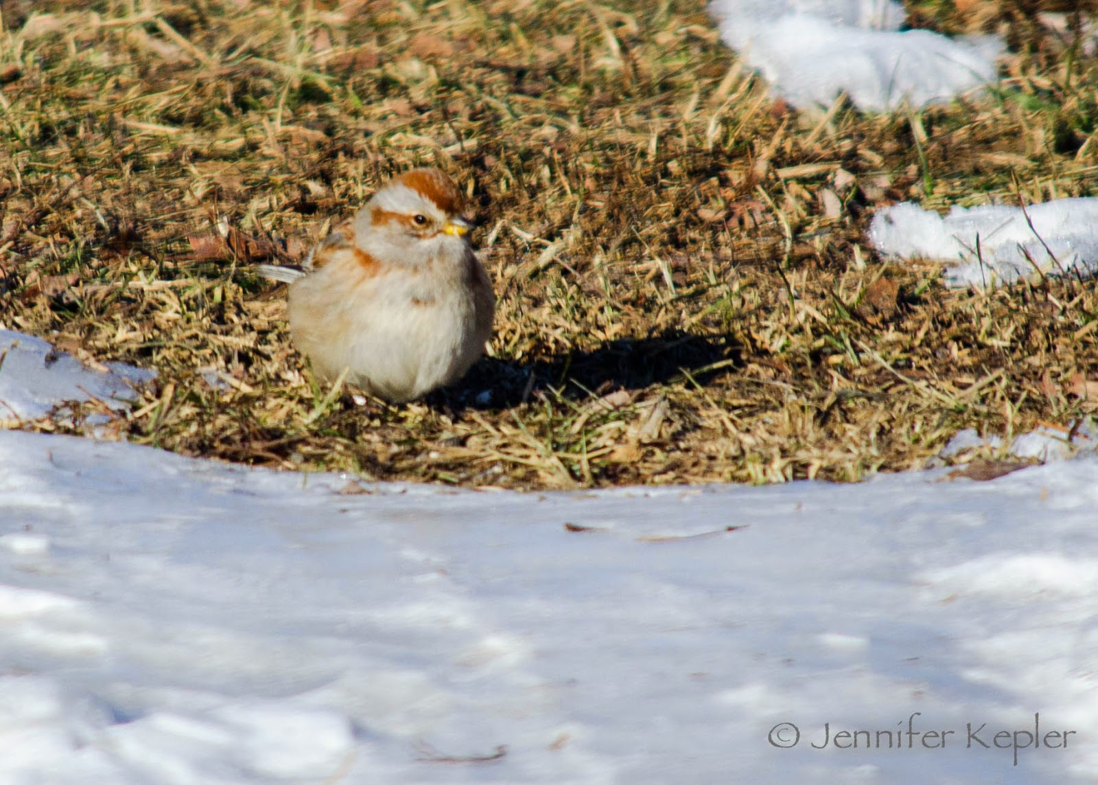 snapshots of nature the great backyard bird count day 1 of 4