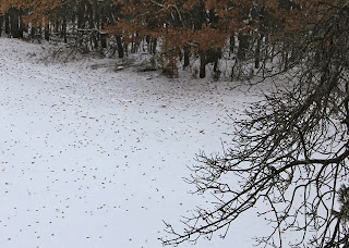 snow with oak leaf clusters