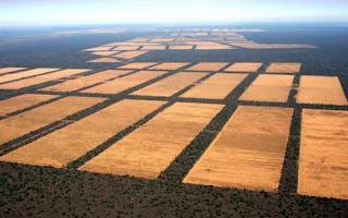 Cambio climático: deforestación y agricultura.