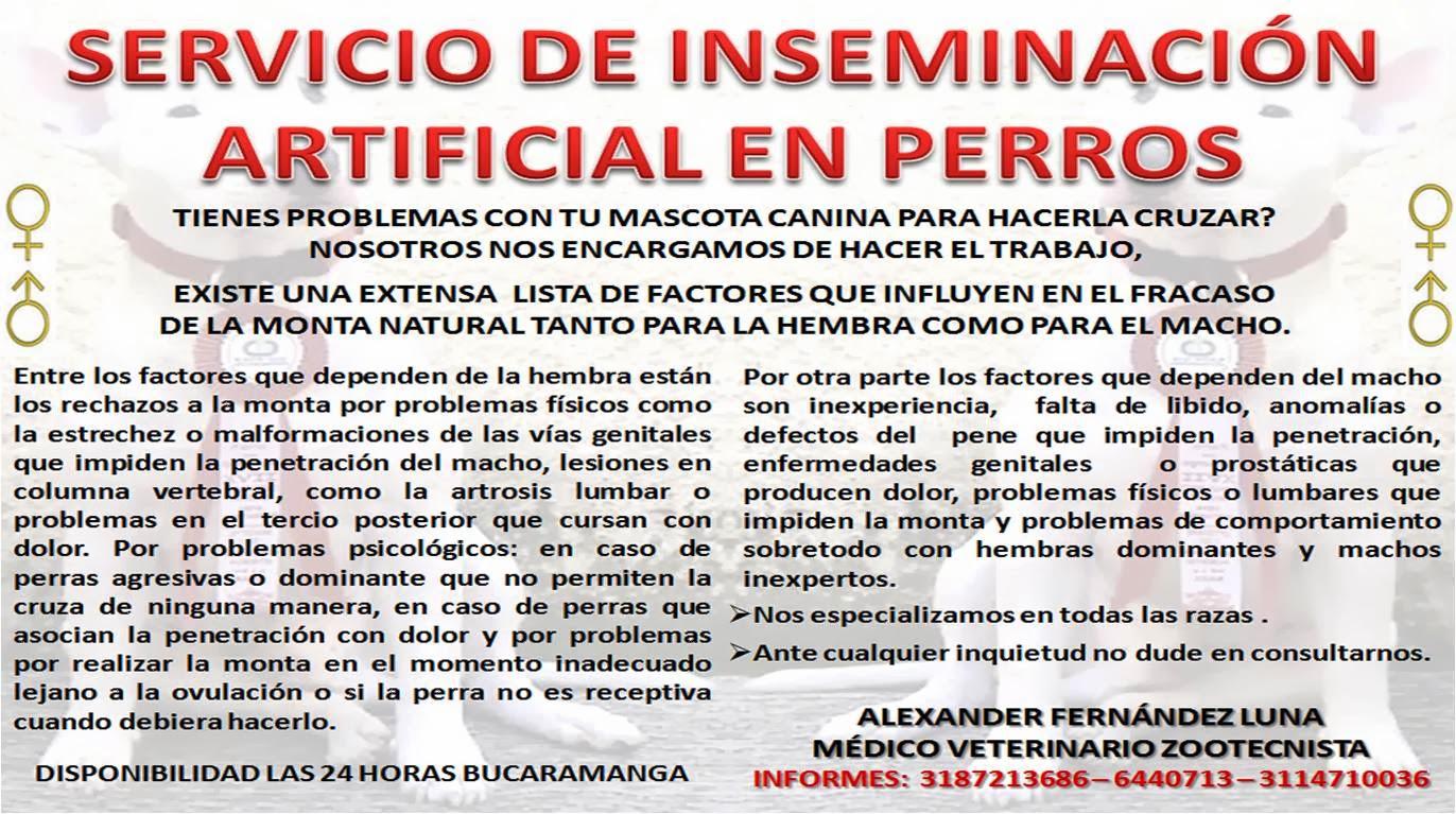 inseminacion artificial en caninos