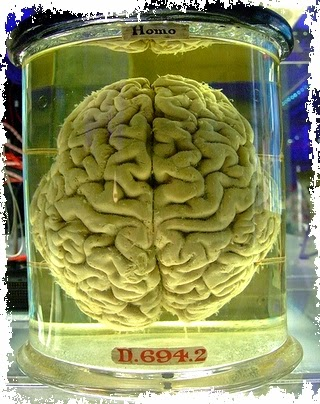 Formaldehyde Brain CosmetiCosmos - blog k...