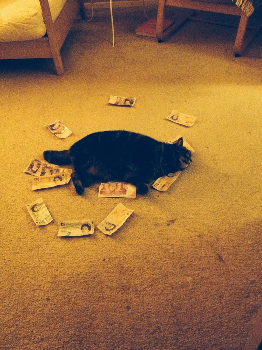 Funny cats - part 94 (40 pics + 10 gifs), cat pictures, cat sleeping with money