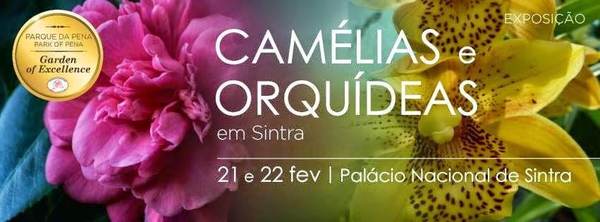 Camélias e orquídeas em Sintra !!!