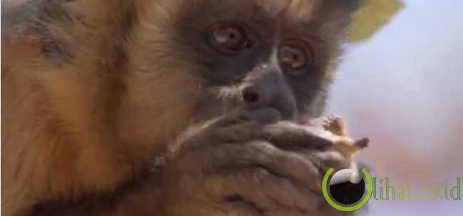 10 Hewan yang Memberi Pelajaran Akan Arti Kehidupan