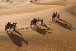 onta dipadang pasir