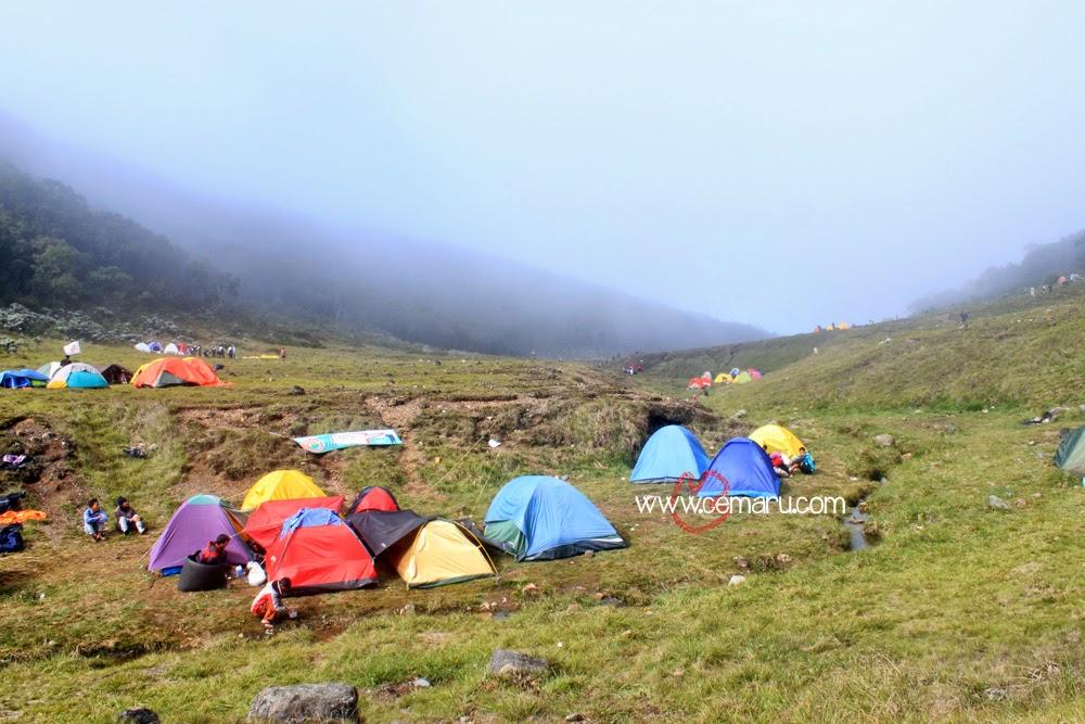 Camping dan Mendaki Gunung Gede - Alun-alun Surya Kencana