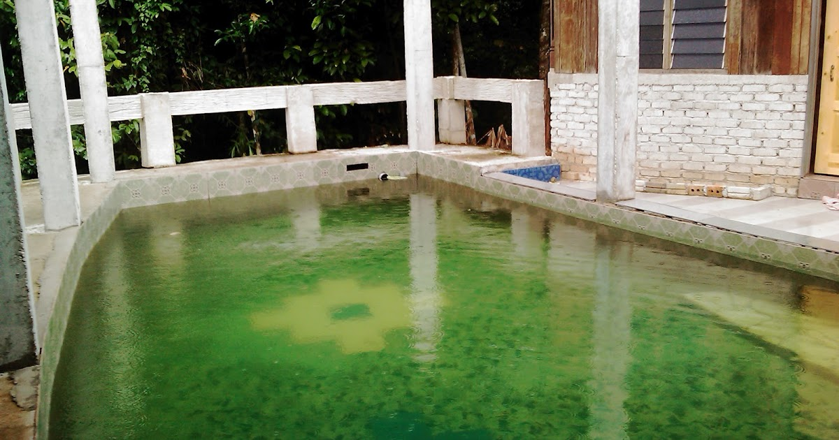 My Malaysia Photos Private Swimming Pool At Salak Denai Chalet Yan Kedah