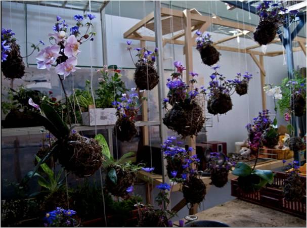 mini jardim aquatico:Flor&Ser – Arte e Paisagismo: Maneiras de apresentar os Kokedamas
