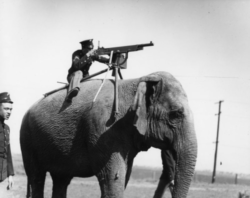 Worlds War One Photos of Animals in World War