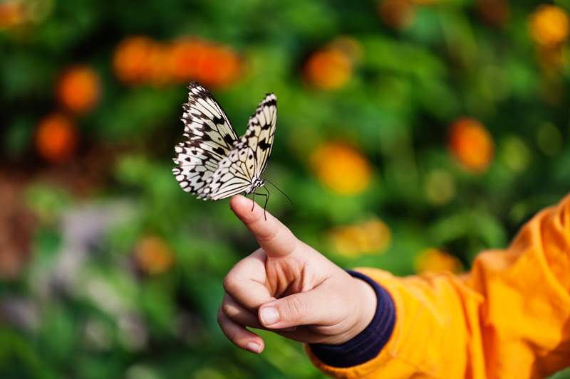 A butterfly sits perched on the finger of a child at the Botanical Gardens in Montreal