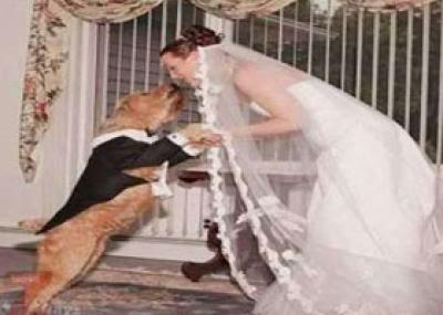 أمريكية تتزوج من كلب والسبب غريب جدا !