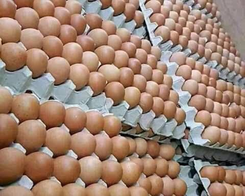 Get Quality Eggs From Us