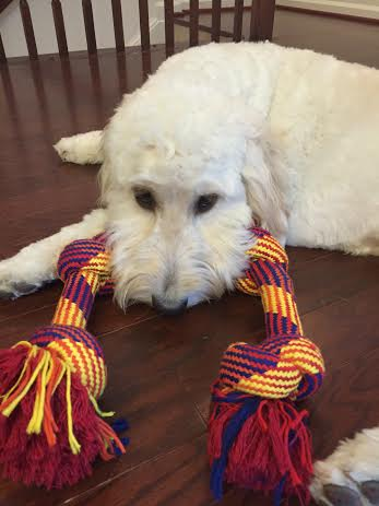 goldendoodle rope toy