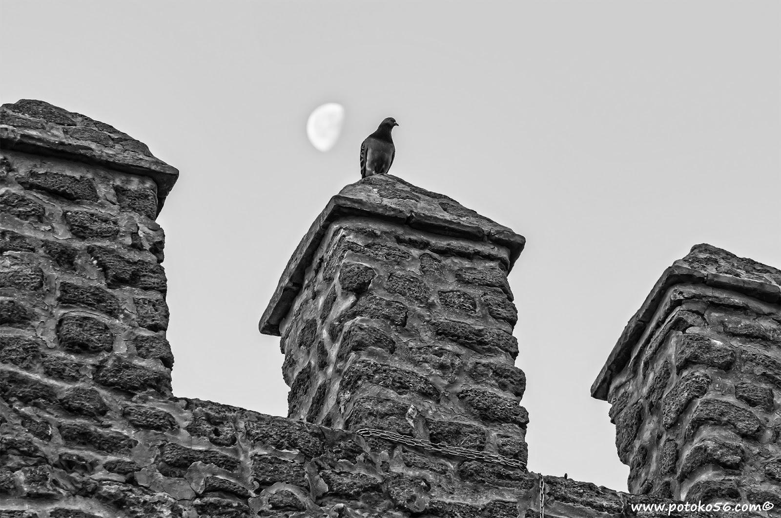 almenas del Castillo de Luna con una paloma y la luna de testigo