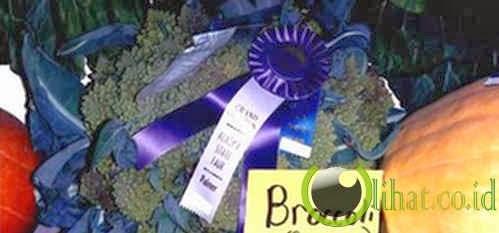 Brokoli terbesar di dunia (35 Lbs atau 15,8 Kg)