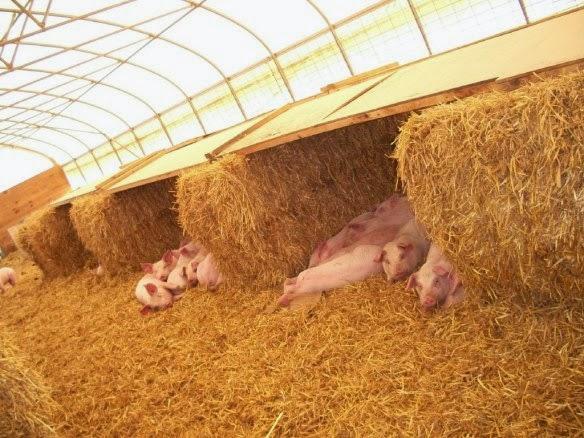 добавку для свиней - на 0