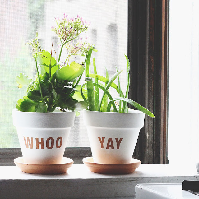 Planters in the windowsill
