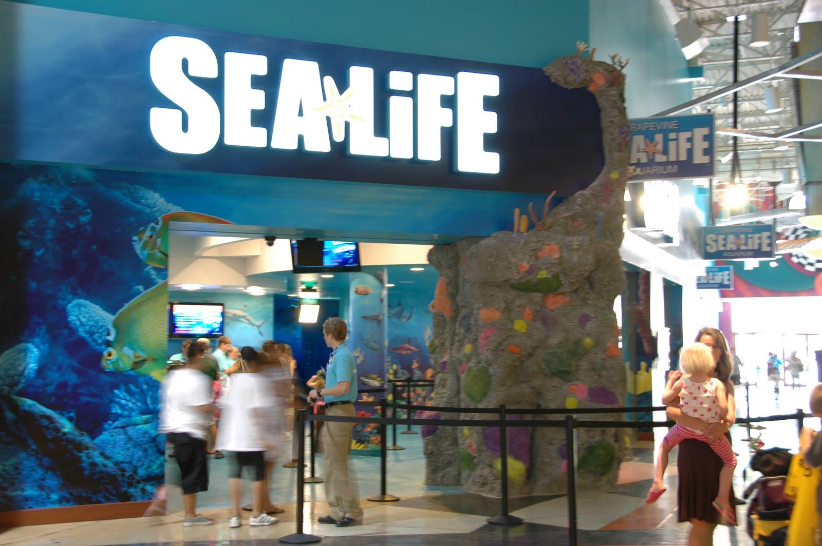 Whatvlthinks Sea Life Grapevine Tx