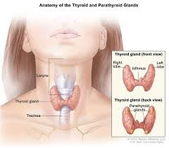 What is called hypothyroidism