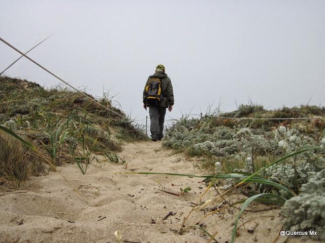Caminando entre la vegetación de la reserva de Ano Nuevo