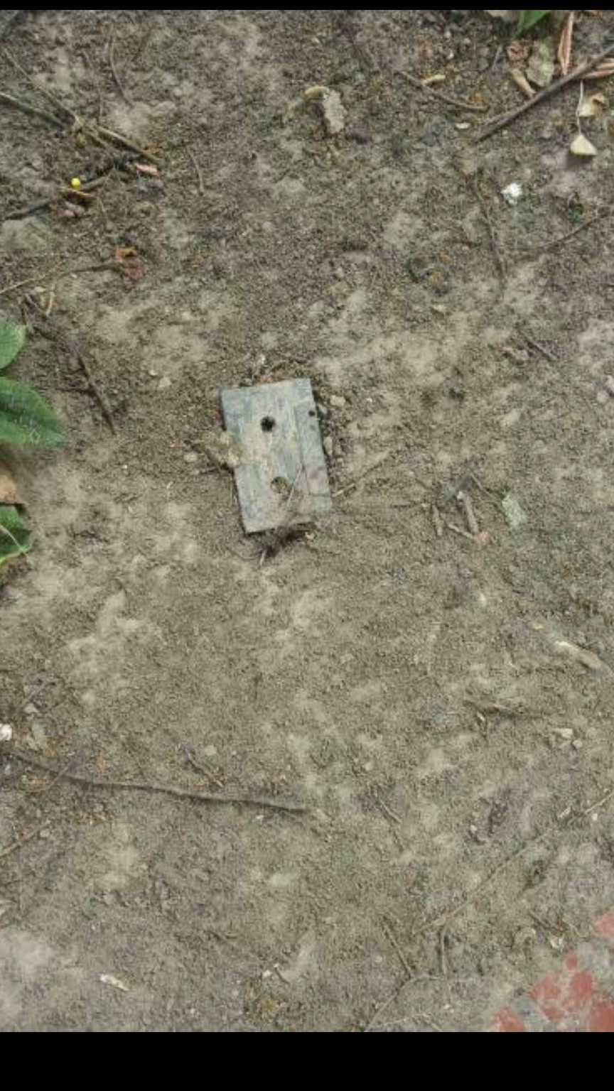 i found a fossil in my backyard 9humors