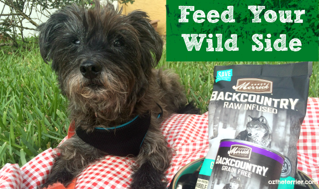 Oz the Terrier reviews Merrick Pet Care Backcountry Raw Infused kibble