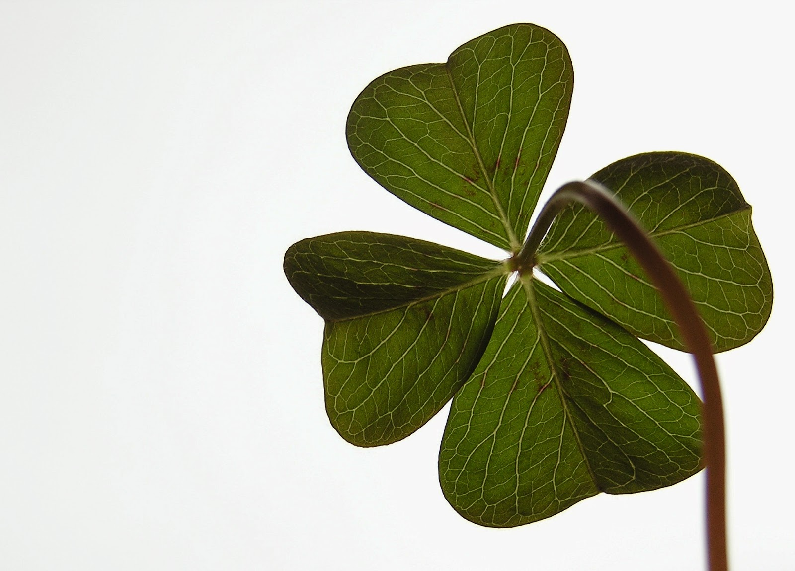 shamrock images for whatsapp