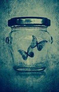 бабочки в банке