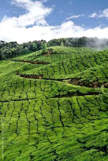 Munnar (Best Honeymoon Destinations In India) 5