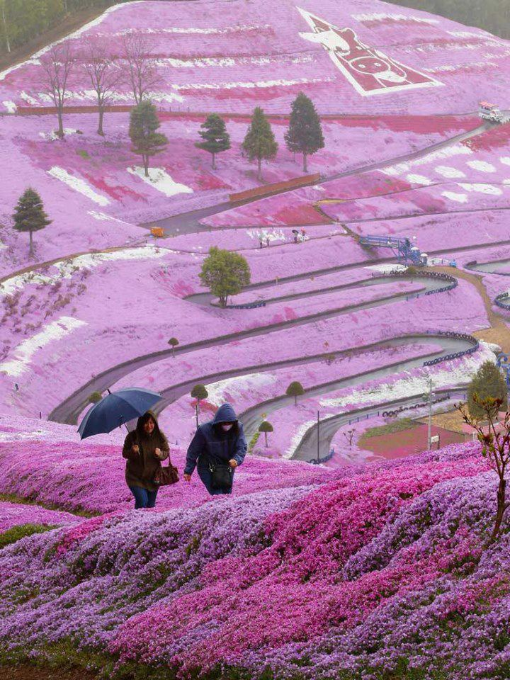 Amazing scenery spring flowers on Hillside, Hokkaido, Japan