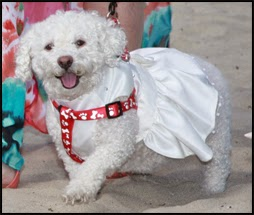 Pet-friendly weddings on the beach in Coronado, La Jolla and San Diego!