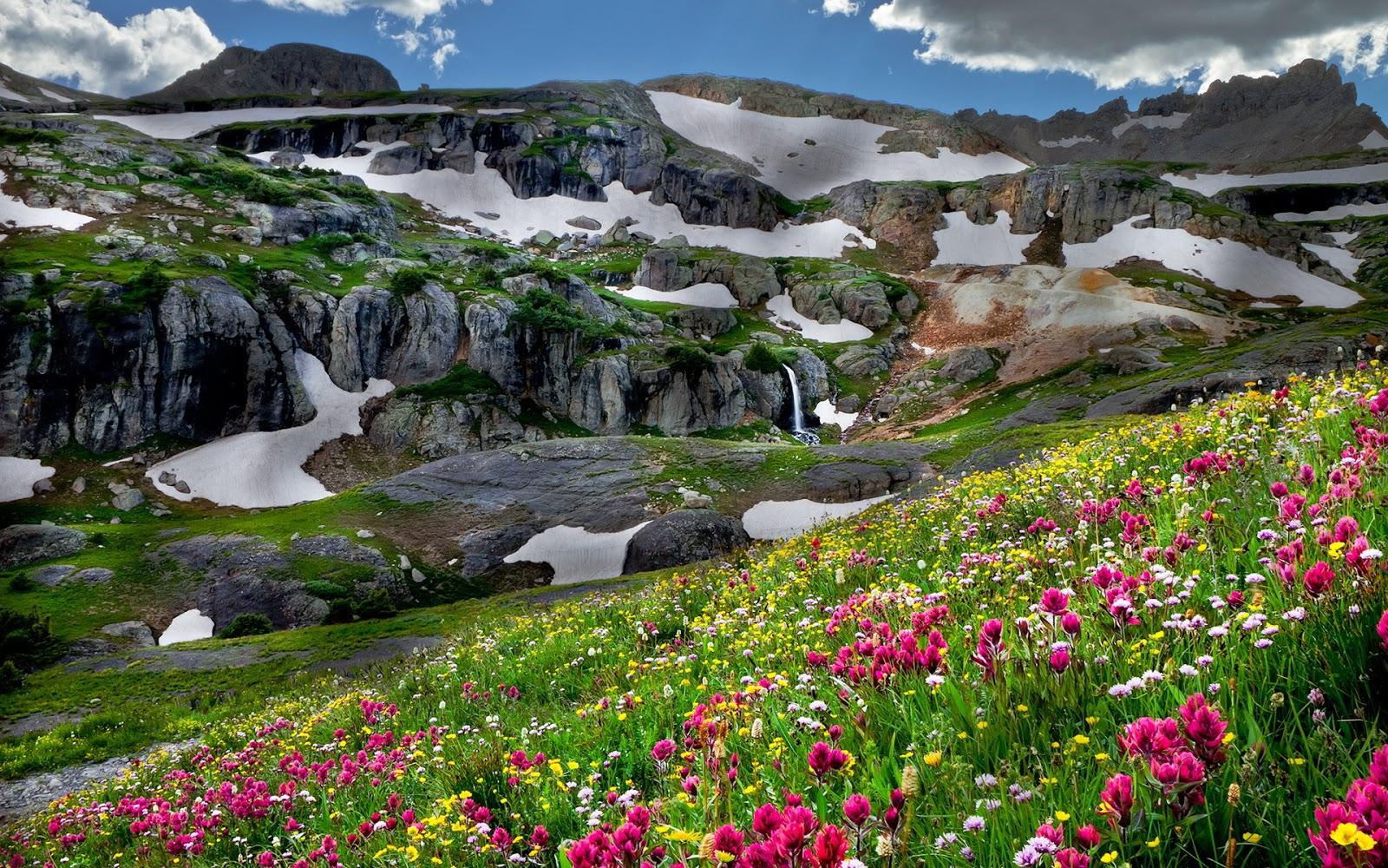 Nota click aqu 237 para ver m 225 s im 225 genes de campos de flores