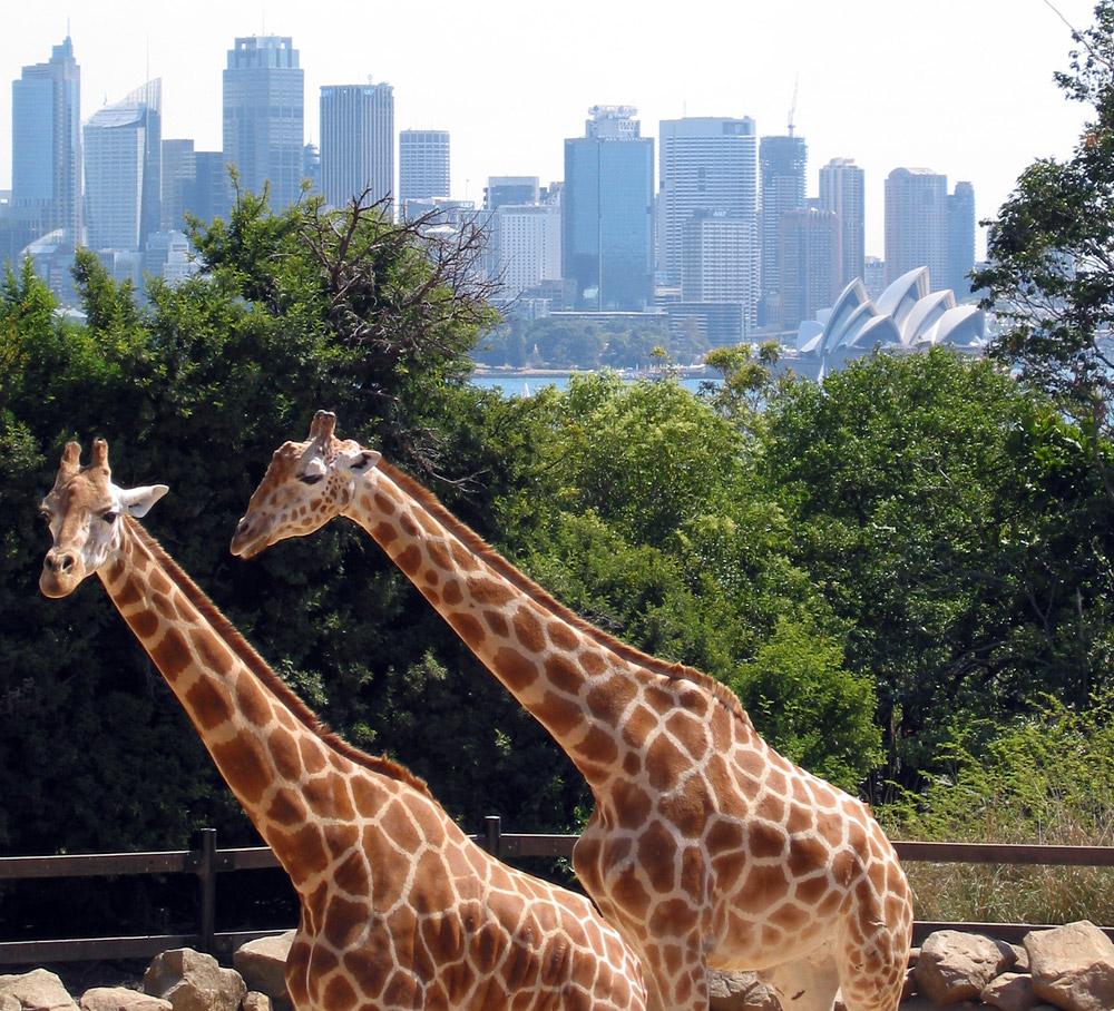 Via Facebook Home Beautiful Magazine Australia: Travel Toursim: Taronga Zoo, Sydney, Australia Nice Pics