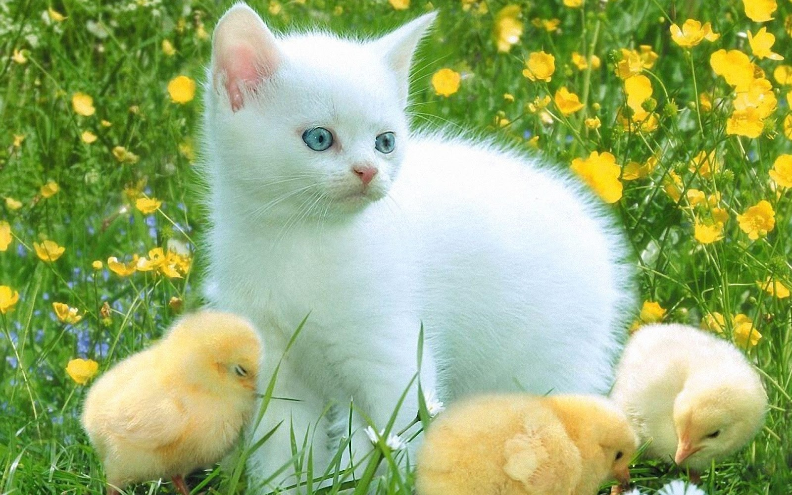 cat & kittens wallpaper -2 | love and quotes