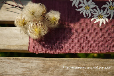 botanical klematis, edelweiss