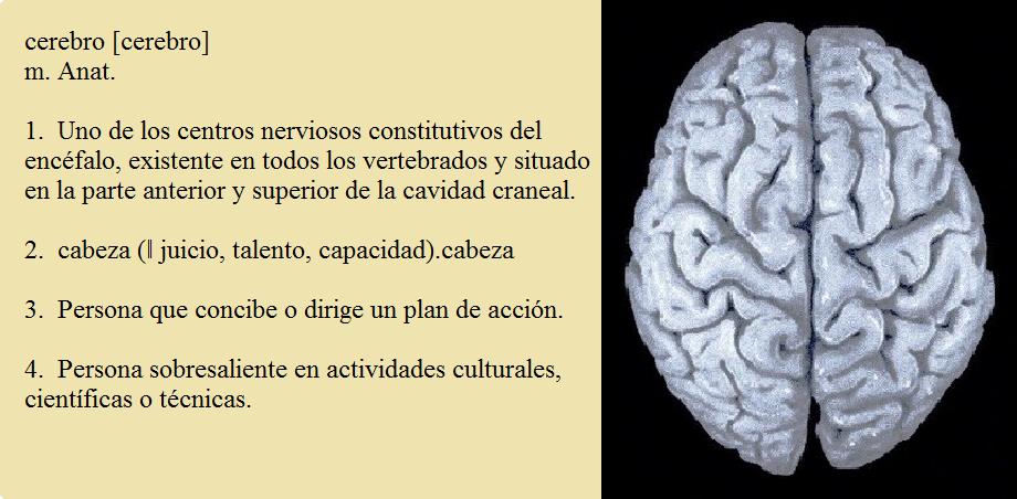 Psicología y cerebro: CEREBRO: FUNCIONES Y ANATOMÍA