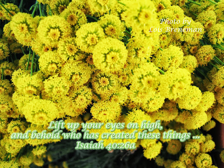 Yellow Flowers - Isaiah 40:26