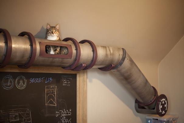 Como deixar sua casa mais confortavel e divertida para seus gatos: cano para gatos