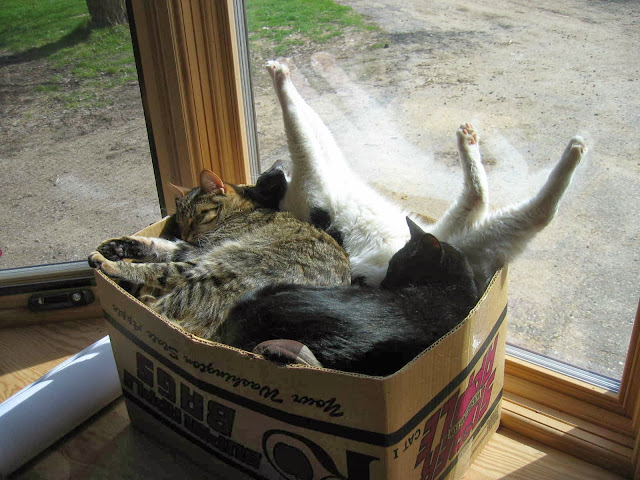 Funny cats - part 85 (40 pics + 10 gifs), a box full of sleeping cats