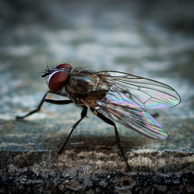 Fliege  - Echsen und Insekten Aufnahmereihe