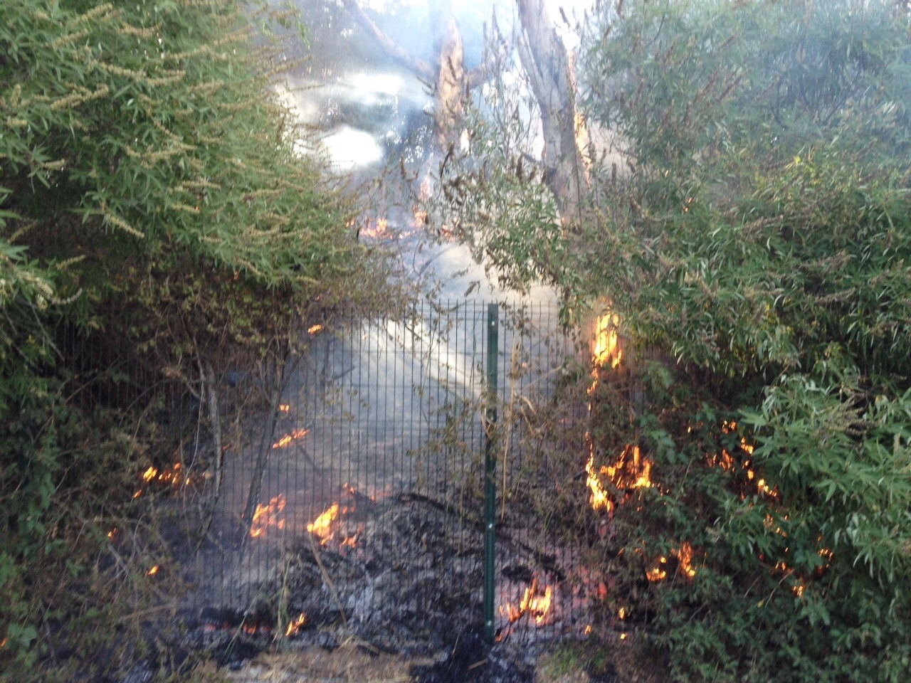 Gel n noticias prenden fuego en la cartuja al jard n for Jardin americano sevilla