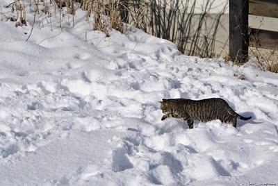 pisica-cat_katze_gato_macska_katt_γάτα