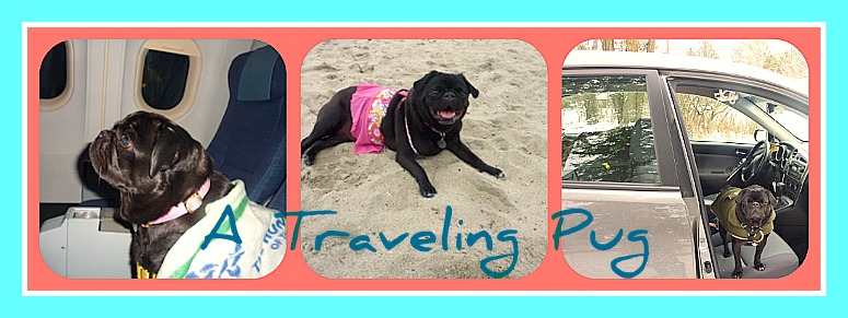 A Traveling Pug