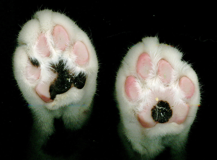 Litter Stuck In Cat S Paws