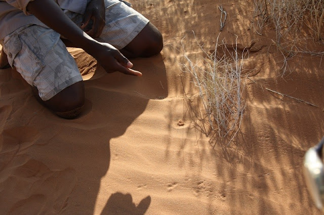 guided-bushmanwalk-namibia
