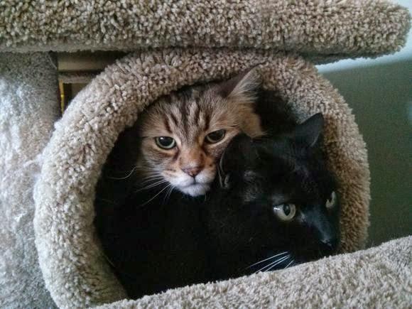 Смешные коты и пылесос